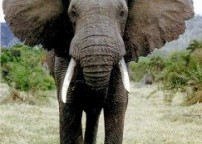 "Worship Leader Devotional ""Going Deeper"": Sound in Elephant Proportions"