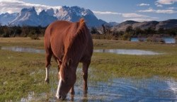 Finding Satisfaction In Ministry: You Can Lead A Horse To Water…