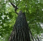 "Worship Leader Devotional ""Going Deeper"": A Tale of Two Trees"