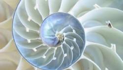 Divine Design:  An Exploration of Beauty & Purpose